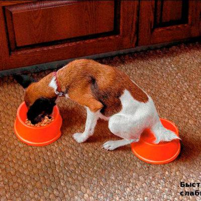 Быстродействующее слабительное для собак