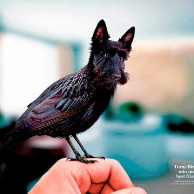 Птица схожа с собакой